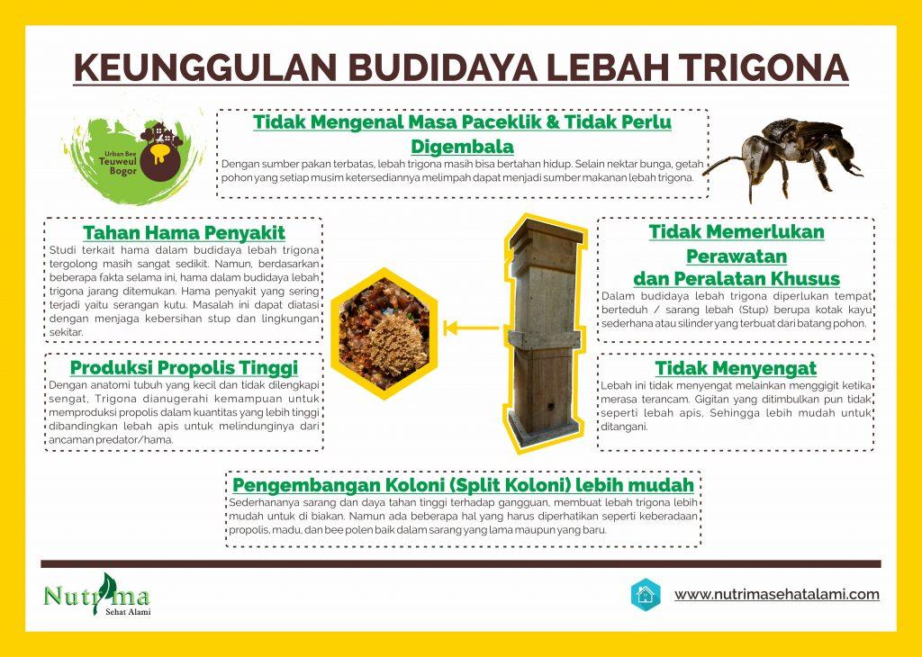 Edisi 2 Lebah Trigona